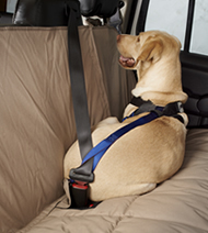 Travel Safe Harness