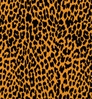 Cheetah Coverking Car Seat Covers